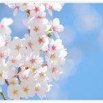 鶴舞公園の桜2017の開花状況は?場所取りや駐車情報も!