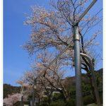 テクニカルじいちゃん(上野公園)の鉄棒がすごい!名前や職業は?