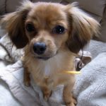 マギーの飼っている犬の種類と名前は?かわいい画像もインスタでチェック!