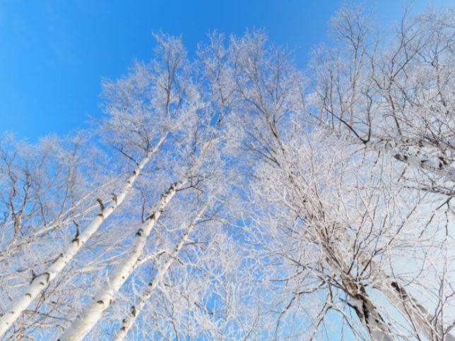 冬空 ダッフルコート季節