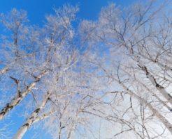 冬の気温推移